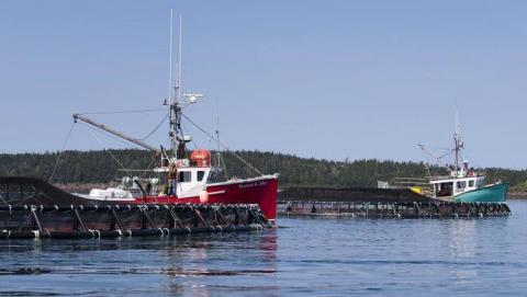Diluting Fisheries Act to further fish farming