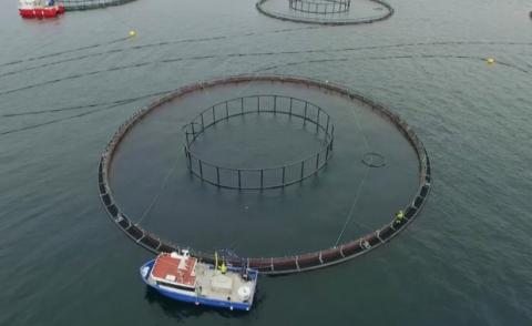 Grieg Seafarms plans to establish sea cage sites in Placentia Bay. (Aqua Maof Group/Submitted)