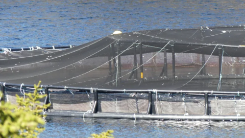 Eastern Shore Residents against Open Salmon Farming