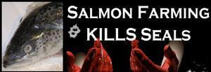 Salmon Farming Kills Seals