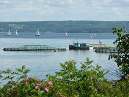 Public Consultation on regulatory framework for aquaculture industry