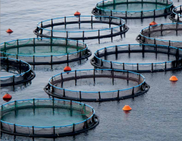 CWF takes position on the aquaculture debate: It´s time to stop