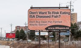 APES Launches a New Billboard Campaign