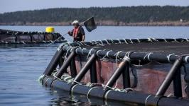 NS taxpayers' money going overseas - Cooke Aquaculture announces $203M Scottish purchase