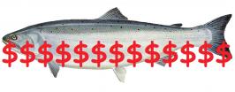 Fish farm culls cost public $138m