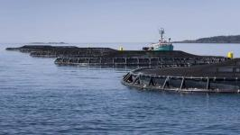 Aquaculture industry blowing smoke