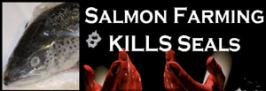 Salmon Farming Kills Seals